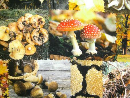 """0,1 m Baumwolldruck """"Pilze und Wald"""" 280 cm br."""