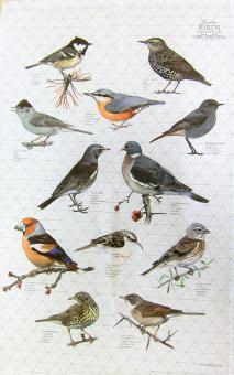 """Baumwoll-Geschirrtuch """"Gartenvögel 2"""" ca. 48x76 cm"""